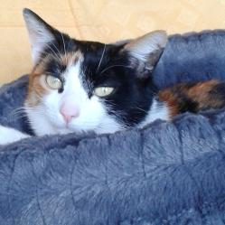 Caline, une vraie tondeuse qui adore être calinée :)